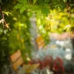Farben des Herbst (botanischer Garten Grüningen)