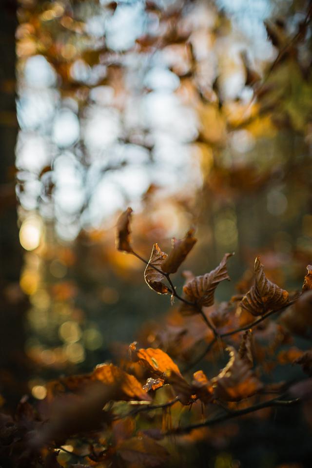im Wald bei Gossau ZH (Michael Rieder Photography)