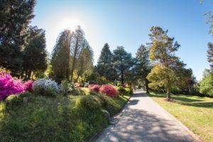 """Der botanische Garten """"Parco San Gratto"""", Rhododendren, Azaleen und Koniferen, bei Carona TI"""